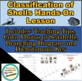 Seashell Branching Cladogram and Dichotomous Key Classification