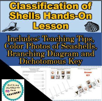 Seashell Branching Cladogram and Dichotomous Key Classification