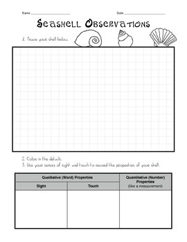 Seashell Observations