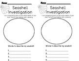 Seashell investigation/ observation