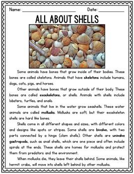 Seashells & Mollusks Unit