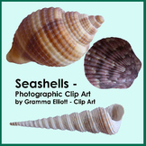Seashells - Photographic Clip Art - Realistic