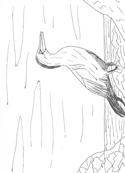 Seaside and Ocean Colouring Sheet: Gannets
