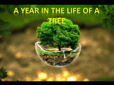 Seasons: A Year in the Life of a Tree (some animations)
