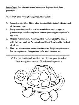 Second Grade Science Animals
