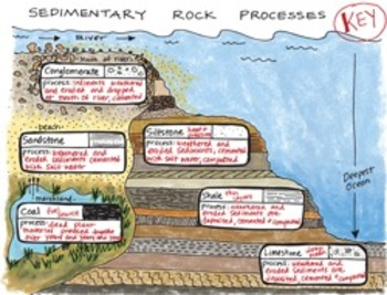 Sedimentary Rock Processes Interactive Notebook Foldable by Science Doodles