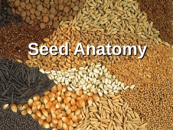 Seed Anatomy