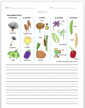 Seed Disbursal, Science for First Grade