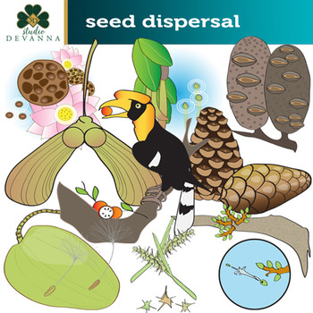Seed Dispersal Plant Clip Art