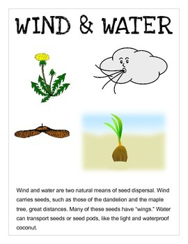 Seed Dispersal -- How are seeds dispersed?