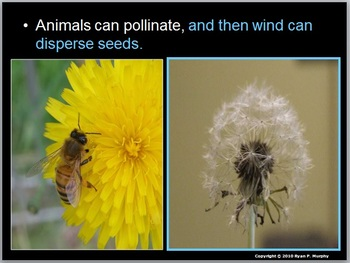 Plants, Seed Dispersal Lesson
