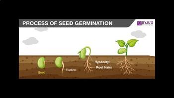 Seed Germination PowerPoint