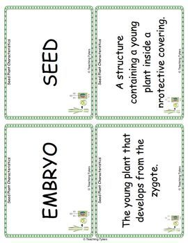 Seed Plant Characteristics Vocabulary Cards
