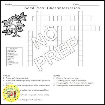 Seed Plant Characteristics Crossword Puzzle