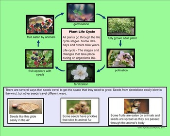 Seed Plant Reproduction - A Fourth Grade SMARTBoard Introduction