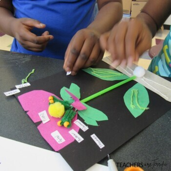 Seed and Flower STEM Kit