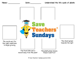Seed cycle / Plant life cycle Lesson plan and Worksheet