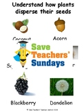 Seed dispersal Lesson plan and Worksheet