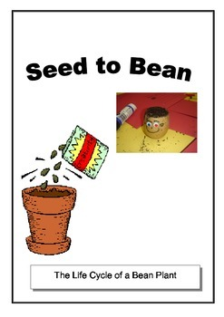 Seed to Bean Lesson