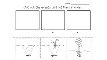 Seed to Flower 3-step Sequence