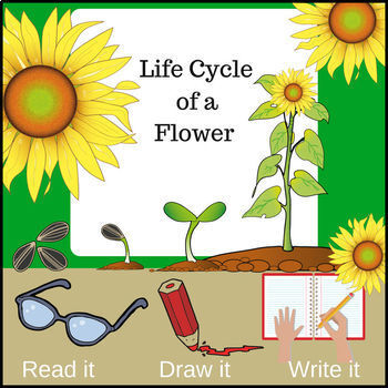Seed to Flower ~ Read it! Draw it! Write it! (Life Cycle o