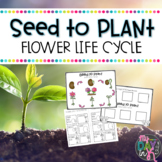 Seed to Plant Activities-Flower Life Cycle