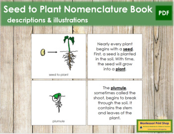 Seed to Plant Nomenclature Book