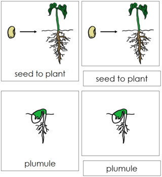 Seed to Plant Nomenclature Cards