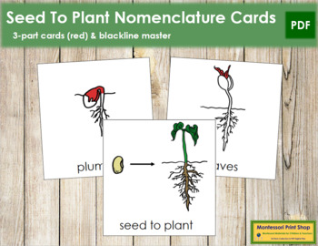Seed to Plant Nomenclature Cards (Red)