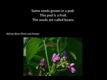 Seeds Are Made By Flowers