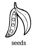 Seeds Coloring Sheet