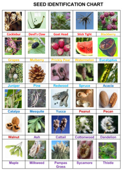 Seeds Crossword Puzzles