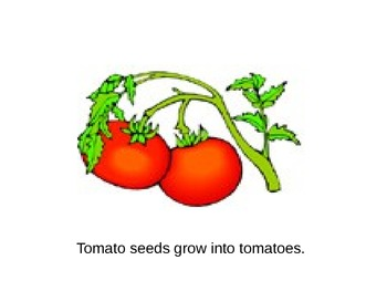Seeds Grow Book (Simple Version) by Lyn Phoenix