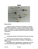 Seeds:  Lesson on seeds