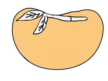 Seeds Life Cycle Clipart