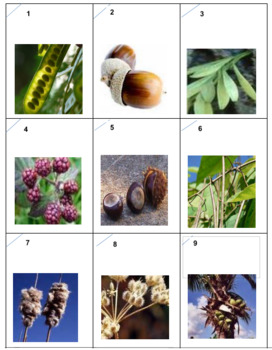 Seeds Photo Safari