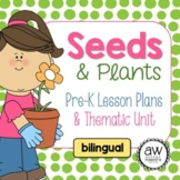 Seeds & Plants Thematic Unit & Lesson plans for Pre-K - bilingual Spanish