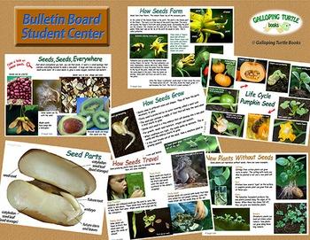 Seeds Seeds Everywhere - Comprehensive Unit