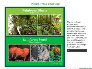 Seeds, Trees, Plants, and Mushrooms – How Do They Grow? EPUB