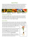 Seeds and Plants Info Sheet