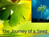 Seeds and Plants PPT