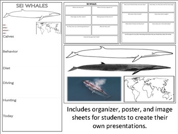 Sei Whales - Mini Unit