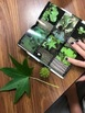 Leaf Collection Project - With a Technology Twist!