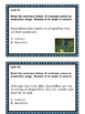 Semicolons: Insect Themed Task Cards