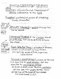 Sensation & Perception Lecture Notes