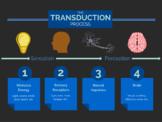 Sensation and Perception Lecture Bundle & Ear Worksheet- AP Psychology