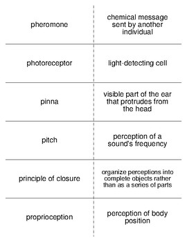 Sensation and Perception Part II Flash Cards For Psychology
