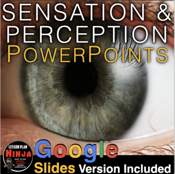 Sensation and Perception PowerPoint + Presenter Notes & Video Clips(Psychology)