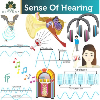 Sense Of Hearing Clip Art