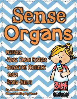 Sense Organs